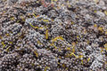 Harvested Red Wine Grapes Stock Image - 16358631