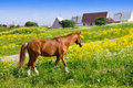 Bay Horse On A Meadow In A Bright Sunny Day Royalty Free Stock Photos - 16368228