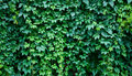 Hedgerow Stock Images - 16371274
