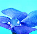 Dew Drop Inside Flower Royalty Free Stock Images - 16379399