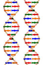 DNA Helixes (isolated On A White Background) Royalty Free Stock Images - 16380629