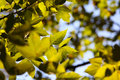 Green Leaves In A Sunlight. Royalty Free Stock Photos - 16386558