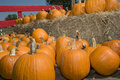 Pumpkins On Hay Royalty Free Stock Photography - 16391347