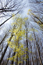 Spring Forest Royalty Free Stock Image - 16393116