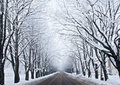 Winter Road Royalty Free Stock Photography - 16403027