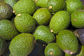 Avacados At Outdoor Farmer S Market Stock Images - 16404184