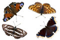 The Four Butterflies Royalty Free Stock Photography - 16411057
