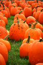 Warted Pumpkins Royalty Free Stock Photo - 16440655