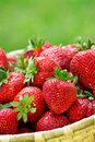 Fresh Strawberries Royalty Free Stock Images - 16450529