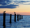 Seagulls At Sunset Royalty Free Stock Photos - 16463508