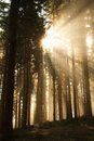 Foggy Forest Stock Photography - 16474502