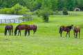 Horses Grazing In Field Royalty Free Stock Photos - 16534918