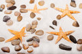 Starfish On The Beach Stock Images - 16542834