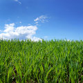 Green Grass Field And Blue Sky Stock Photo - 16574360