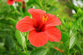 Tropic Flower Stock Photography - 16602522