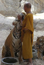 Buddhist Monk With Bengal Tiger,thailand,asia,cat Royalty Free Stock Photo - 16618255