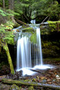 Lush Forest At Fern Falls. Stock Photography - 16622752
