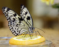 Butterfly Royalty Free Stock Photos - 16634318