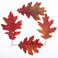 Autumn Leaves Background Royalty Free Stock Images - 16639549