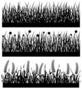 Grass Plant Flower Silhouette Royalty Free Stock Photography - 16681127