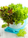 Mixed Lettuce In A Bowl Royalty Free Stock Images - 16681599