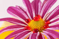 Flower Bud Surrounded By Red Royalty Free Stock Photography - 16690977