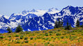 Mt Olympus Snow Mountains Purple Lupine Hurricane Royalty Free Stock Photo - 16695515