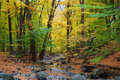 Autumn Woods And Creek Royalty Free Stock Photography - 16696717
