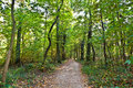 Path Through Old Oak Forest Stock Photo - 16725080