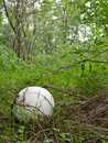 Giant Puffball Royalty Free Stock Image - 16742406