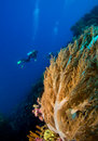 Coral Reef Stock Images - 16783834
