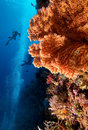 Coral Reef Royalty Free Stock Photo - 16783925