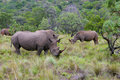 Rhinoceros In South Africa Stock Photos - 16789333