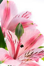 Flowers Stock Images - 1684904