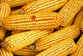 Dried Ears Of Corn Stock Photography - 1689832