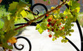 Grapes Cluster Stock Photography - 16800512