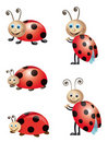 Lady Bugs Stock Photo - 16809370
