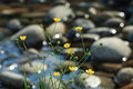 Yellow Flowers On The Bank Of A Mountain Stream Stock Image - 16891171