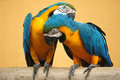Parrot Stock Photography - 1693032