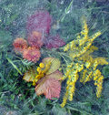 Leaves, Leaf, Flowers, Grass Under Ice Stock Photo - 16940670