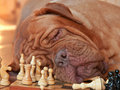 Tiresome Game Stock Photography - 16972332