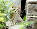 Staring Cat Stock Images - 17001584