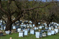Bee Hives Royalty Free Stock Image - 17090176