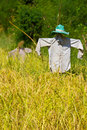 Scarecrow Royalty Free Stock Image - 17104566