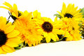 Sunflowers Royalty Free Stock Photography - 17112797