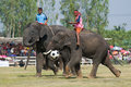 The Annual Elephant Roundup In Surin, Thailand Royalty Free Stock Photo - 17149985
