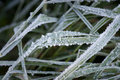 Ice Crystals On Grass Royalty Free Stock Photo - 17154745