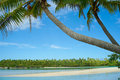 Palms Leaning Idyllically Over Waters Edge. Stock Image - 17172631