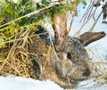 Rabbit Sit Under Bush Royalty Free Stock Photography - 17246787
