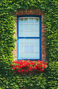 Window And Ivy  Royalty Free Stock Photos - 17316738